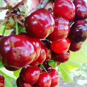 Fruta y setas
